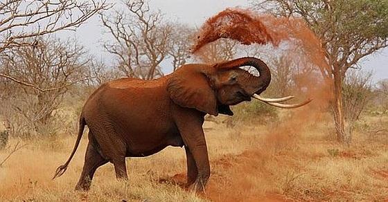 Słoń ciekawostki