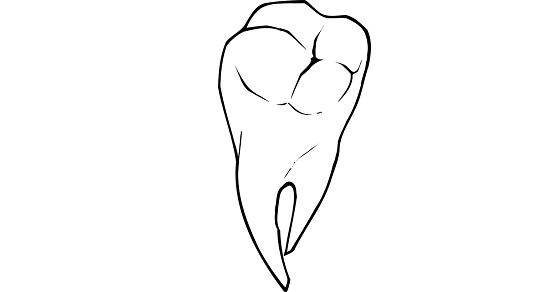 Ząb mądrości ciekawostki