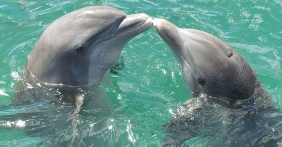 Delfin ciekawostki
