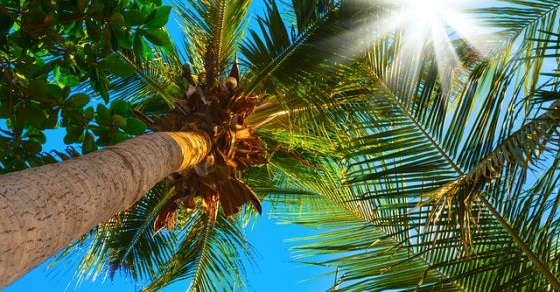 Palmy ciekawostki