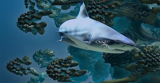 Rekin ciekawostki