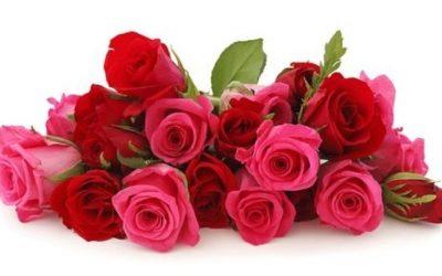 Róże ciekawostki