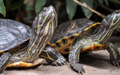 Żółwie ciekawostki