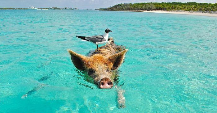 Bahamy ciekawostki