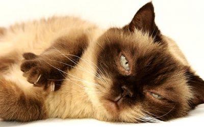Kot domowy ciekawostki