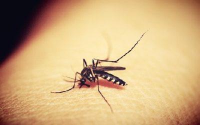 Malaria ciekawostki