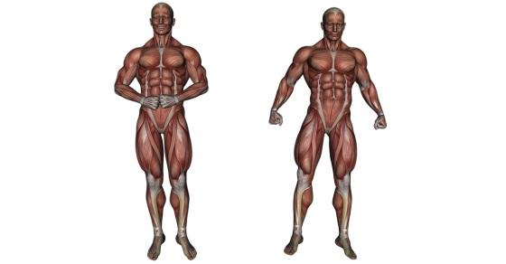 Mięśnie ciekawostki
