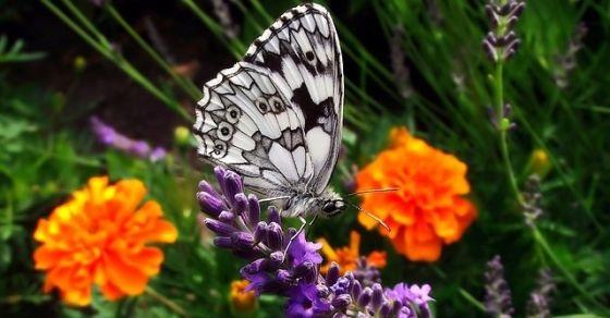 Motyle ciekawostki