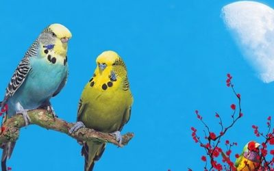 Papugi ciekawostki
