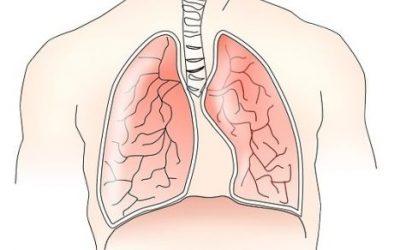 Płuca ciekawostki
