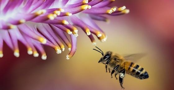 Pszczoły ciekawostki