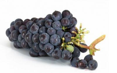 Winogrona ciekawostki