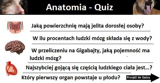 Anatomia quiz – część 1