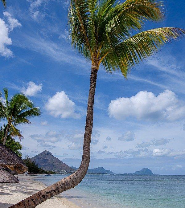 Odkryj szlaki herbaciane na Mauritiusie z biurem podróży
