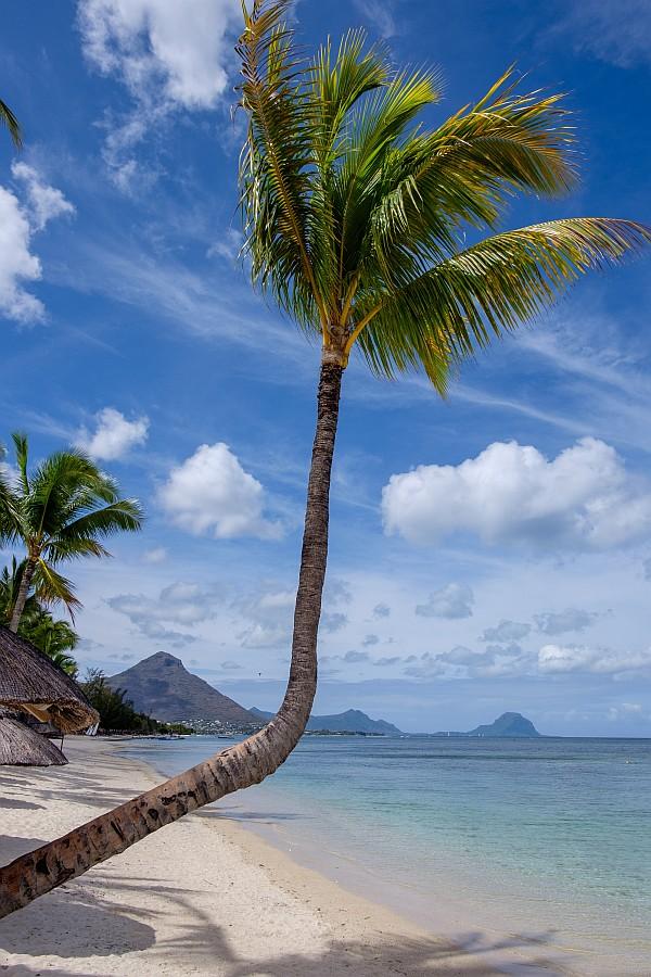 szlaki herbaciane na Mauritiusie