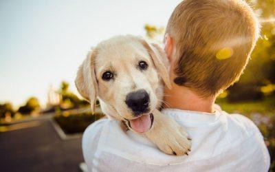 13 ciekawostek o psach – fakty, mity