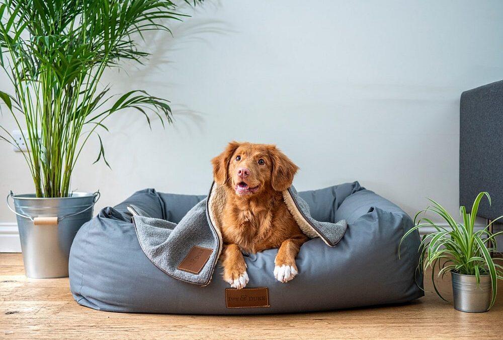Legowisko dla psów – dlaczego pies powinien mieć swoje miejsce w domu?