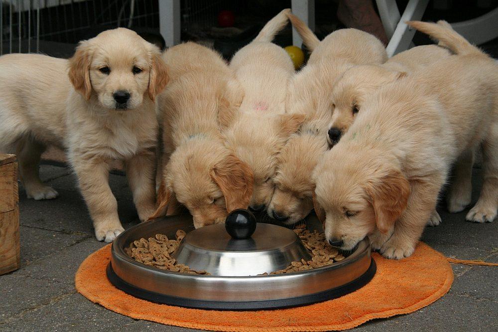 Dbaj o zdrowie przyjaciela – wysokiej jakości karma dla psa