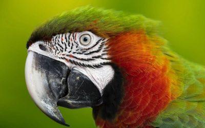 Niezwykłe ciekawostki o zwierzętach