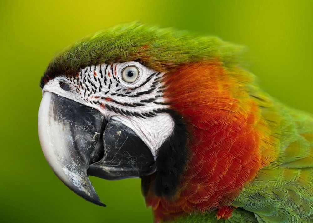 papuga ciekawostki papugi