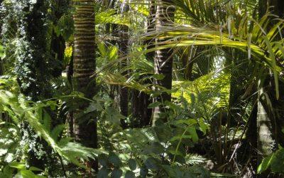 Amazonia ciekawostki