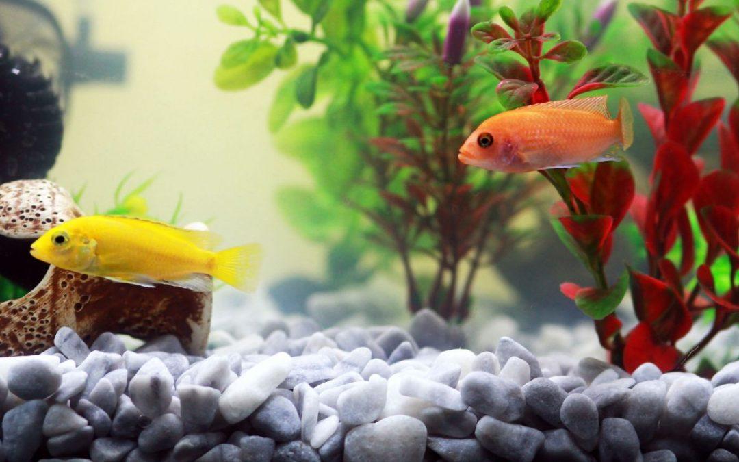Odmulacz do akwarium – sprawdź, co musisz o nim wiedzieć!