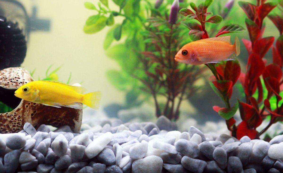 czysta woda w akwarium