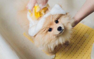 Jak przekonać psa do wizyty w salonie fryzjerskim?