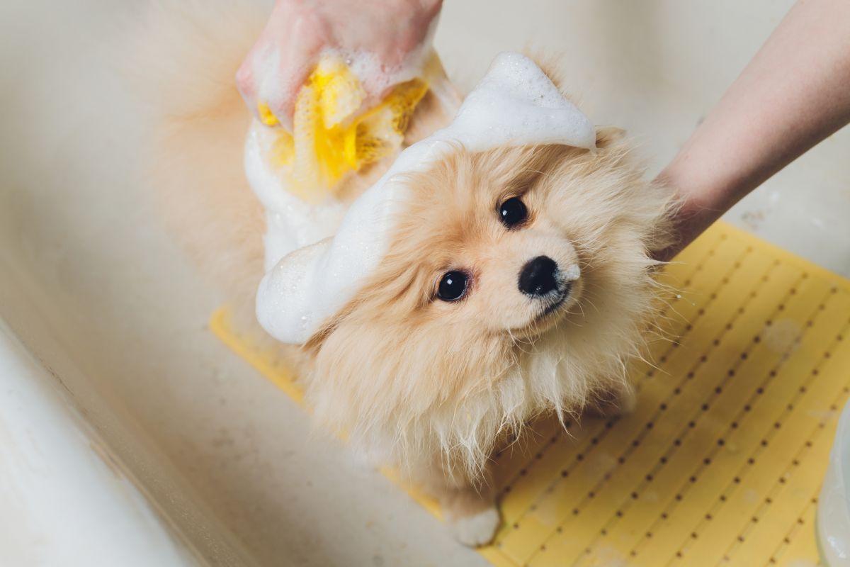 salon fryzjerski dla psów