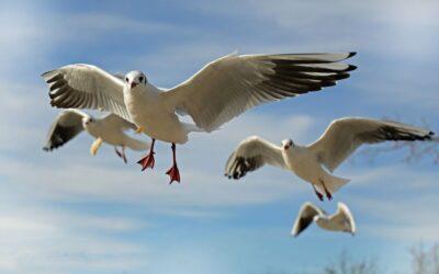 Ptaki ciekawostki