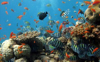 Ryby ciekawostki